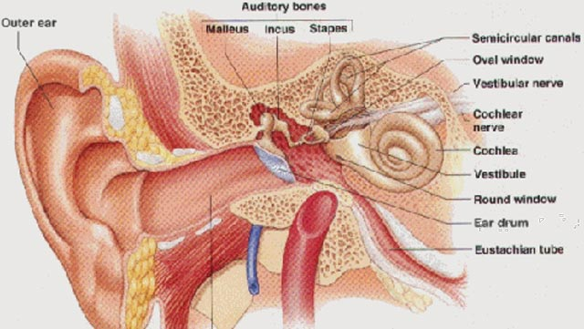 Ear Infection In Childrenthe Signs And How To Deal Features The