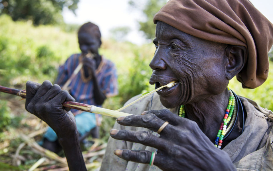 Akech Yai and (background) her granddaughter Abuk Gang (12) eat sorghum canes collected from other cultivators' land which was damaged due to the dry spell, on October 12, 2016 in Aweil.  More than 50% of the cultivation has been lost in the area due to dry spells, floods and plant deseases. Since March 2016, more than 70,000 people from Northen Bahr al Ghazal migrated to the neighbouring country Sudan due to the lack of food and the inflation in the market. According to the Food Security Outlook Update released by Famine Early Warning System Network (Fews Net) in September, in Northern Bahr el Ghazal, some households are in Catastrophe phase level (IPC Phase 5), as they suffer from extreme lack of food, with households facing significant food consumption gaps, high levels of malnutrition and mortality.  / AFP PHOTO / Albert Gonzalez Farran - AFP / Albert Gonzalez Farran