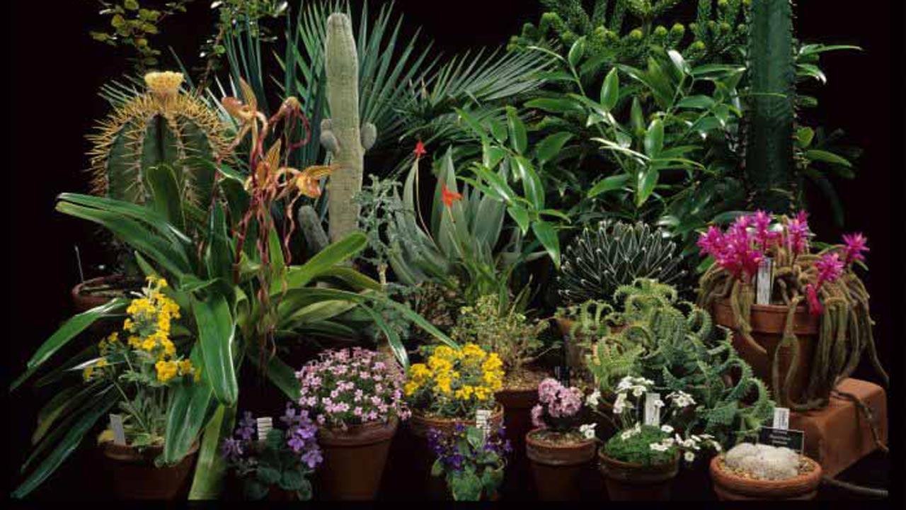 Botanical Society of Nigeria