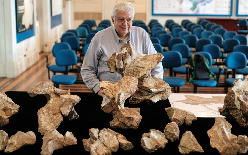 The Director of Earth Science Museum, Diogenes de Almeida Campos speaks to AFP while he shows some fossils of a dinosaur's neck, that were collected in 1953 by the Brazilian paleontologist Llewellyn Ivor Price at Earth Science Museum in Rio de Janeiro on October 6, 2016. The dinosaur newly named Austroposeidon Magnificus was about 25 meters long and the largest among 9 species discovered in Brazil.  / AFP PHOTO / YASUYOSHI CHIBA