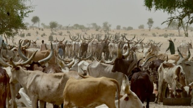 Fulani Herdsmen. PHOTO: Issouf Sanogo (AFP/File)