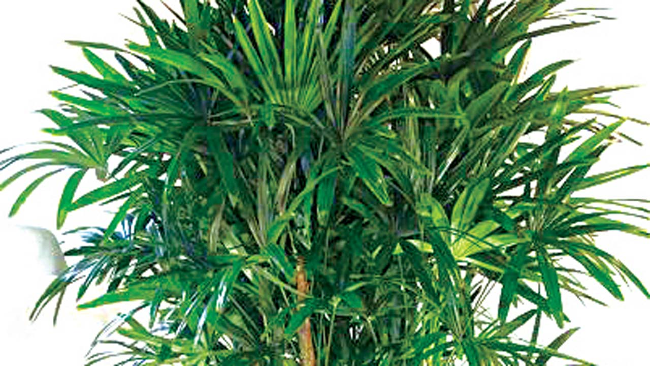 House Plants For Lazy Gardeners Saturday Magazine The Guardian