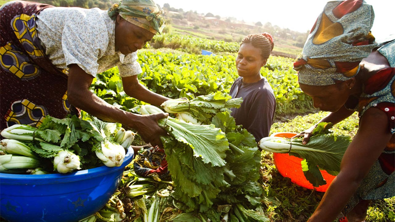 Lagos Empowers 315 Women, Youth In Agric Value Chains