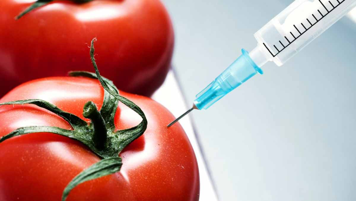 guardian.ng - Anietie Akpan, Calabar - CSOs urge government to reject agricultural biotechnology as solution to food challenges