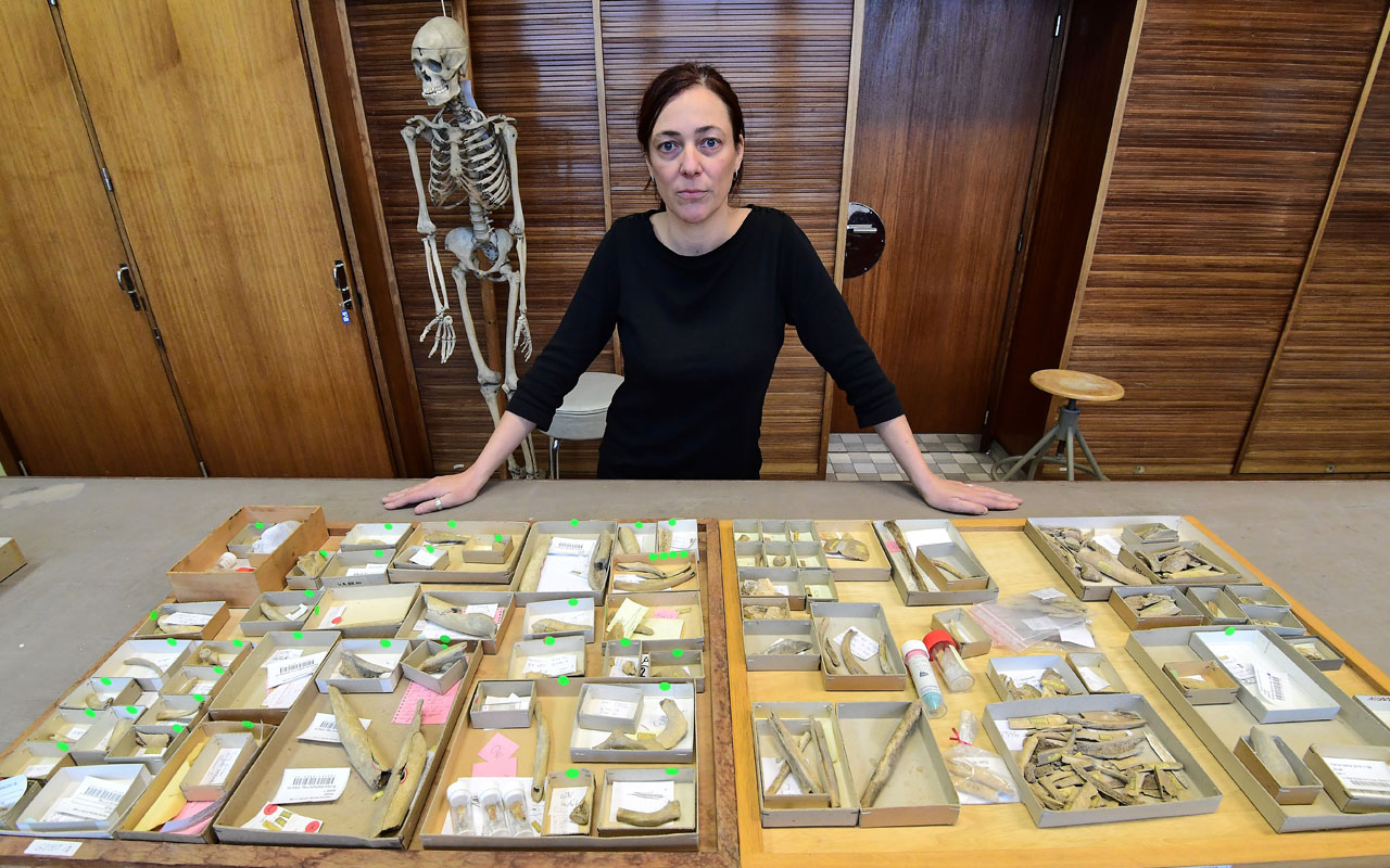 Helene Rougier, anthropologist at California State University Northridge in the United States, displays some of the 96 bones and three teeth from five Neanderthal individuals which were found in the Belgium Goyet cave at the Royal Belgian Institute of Natural Sciences, in Brussels, on December 21, 2016. Deep in the caves of Goyet, in present-day Belgium, researchers have found the grisly evidence that the Neanderthals did not just feast on horses or reindeer, but also on each other. / AFP PHOTO / EMMANUEL DUNAND