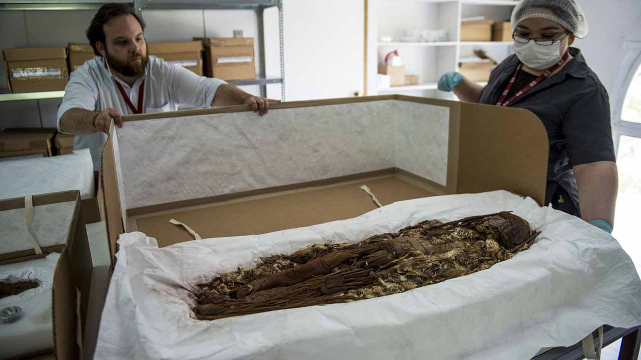 Chilean anthropologist Veronica Silva shows one of the mummies from the ancient Chinchorro culture at the National Museum of Natural History in Santiago, on December 16, 2016. Chilean researchers are seeking special UNESCO world heritage status for the Chinchorro mummies, the most ancient in the world according to Chilean physical anthropologist Bernardo Arriaza. Martin BERNETTI / AFP