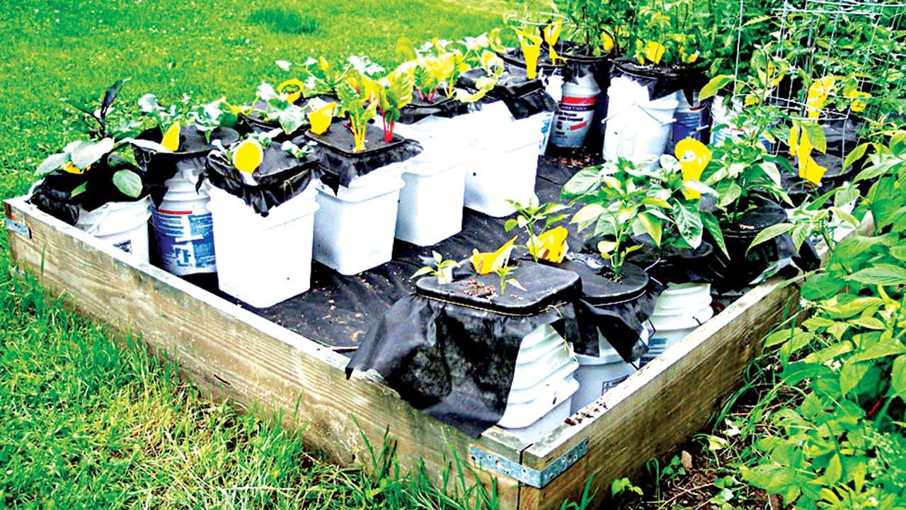 Watering container gardens saturday magazine the guardian nigeria newspaper nigeria and - Self watering container gardening system ...