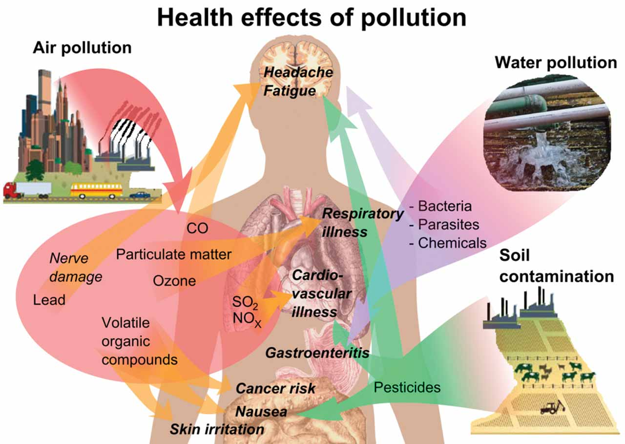 AIR POLLUTION... This is a major public health issue for people living in polluted urban areas where exercise could damage the lungs and potentially lead to decompensated heart failure.   PHOTO CREDIT: Wikimedia
