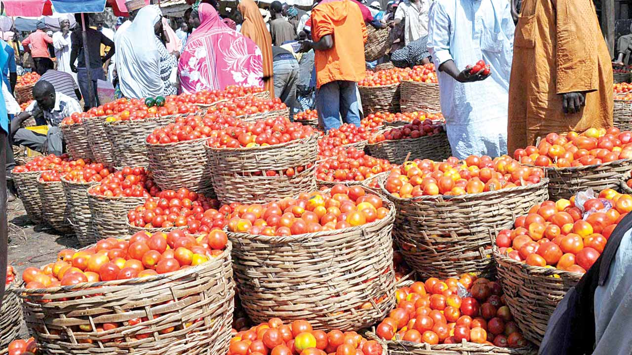 Fresh tomatoes waiting for buyers