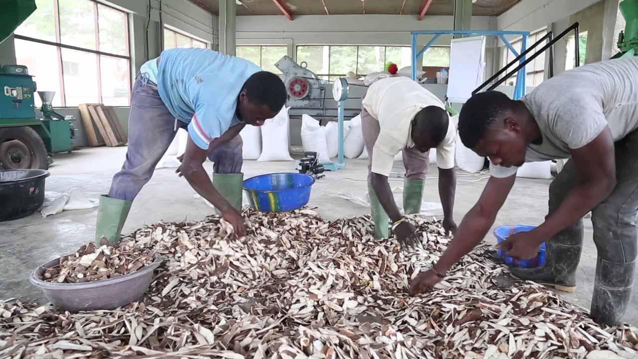Cassava livestock feeds