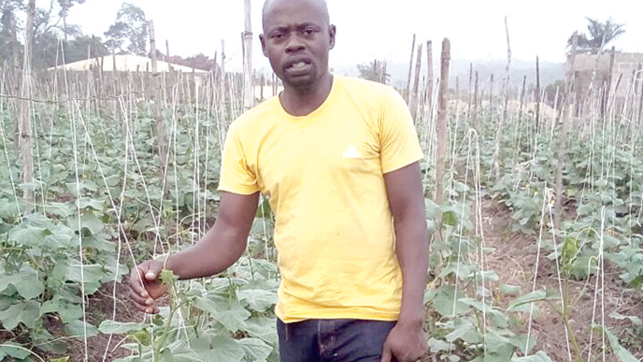 Anjorin, in his Cucumber farm.