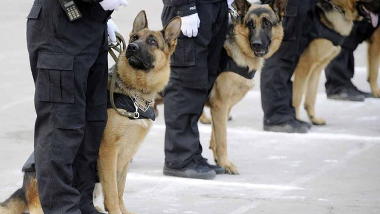 Fg To Deploy Armed Guards Dogs In Airports The Guardian