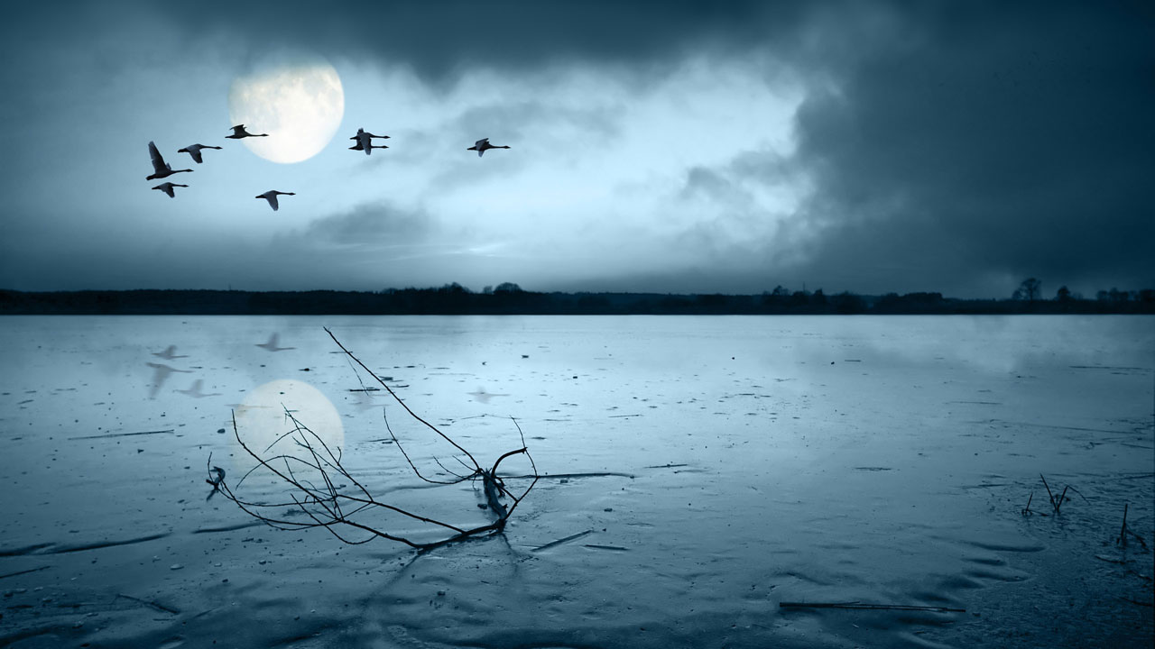 migratory_birds-wallpaper-2560x1600