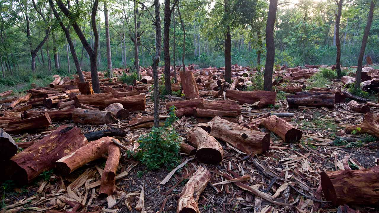 devastating effects of deforestation and overcrowding the guardian