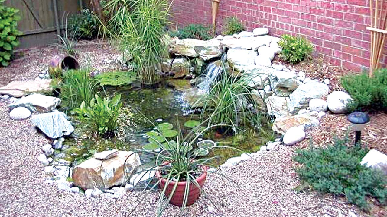 Mini ponds a pond in a pot why not saturday magazine for Pond with plants