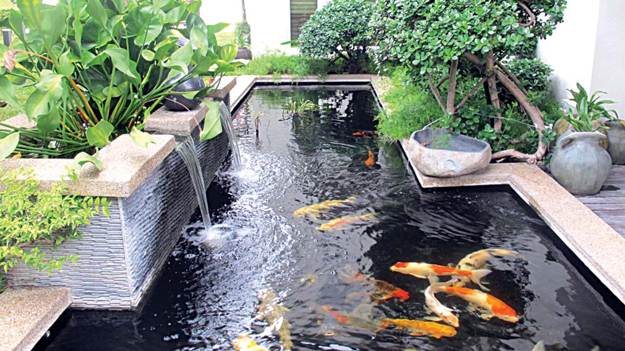 Mini ponds a pond in a pot why not saturday magazine for Container ponds with fish