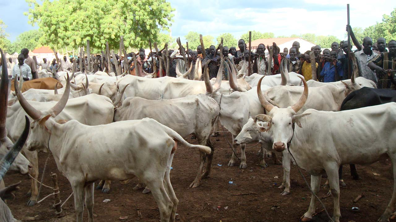 Image result for Dialogue will solve Ruga Policy controversy - Masari