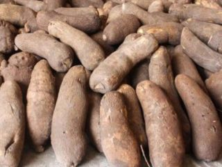 Image result for Nigeria's Yam Exporters Dismisses Reports Of Products Rejection Abroad