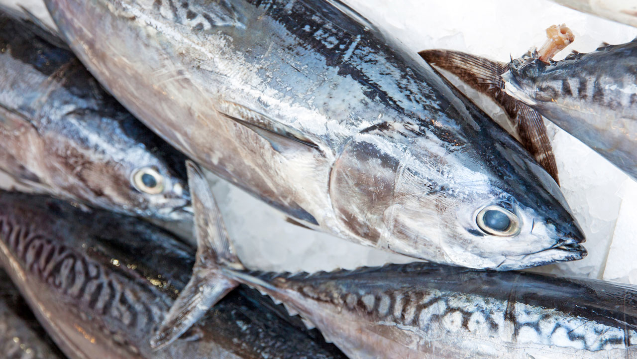 Doctor warns against consumption of fishes with high for Fish high in mercury