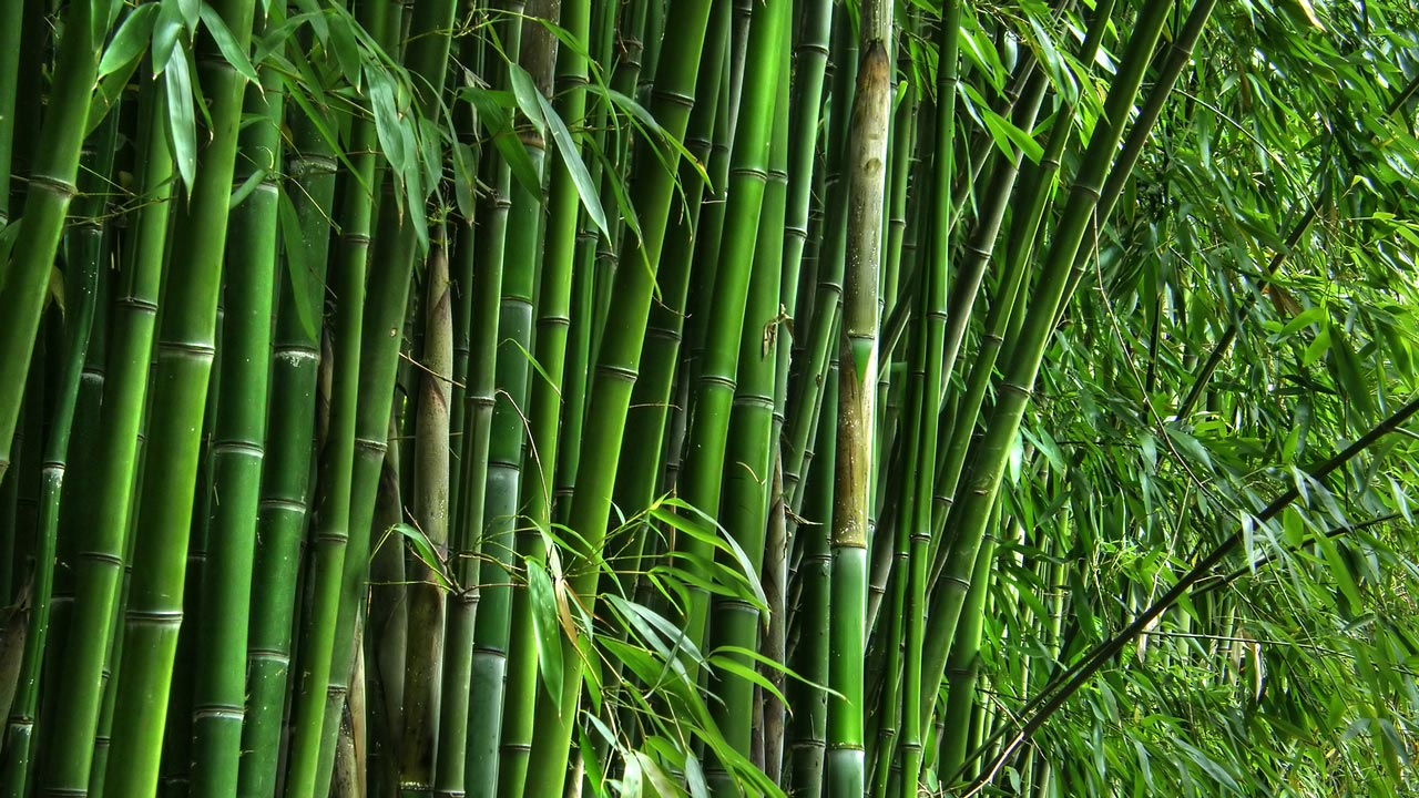 ogun advocates exploitation of bamboo tree for economic growth