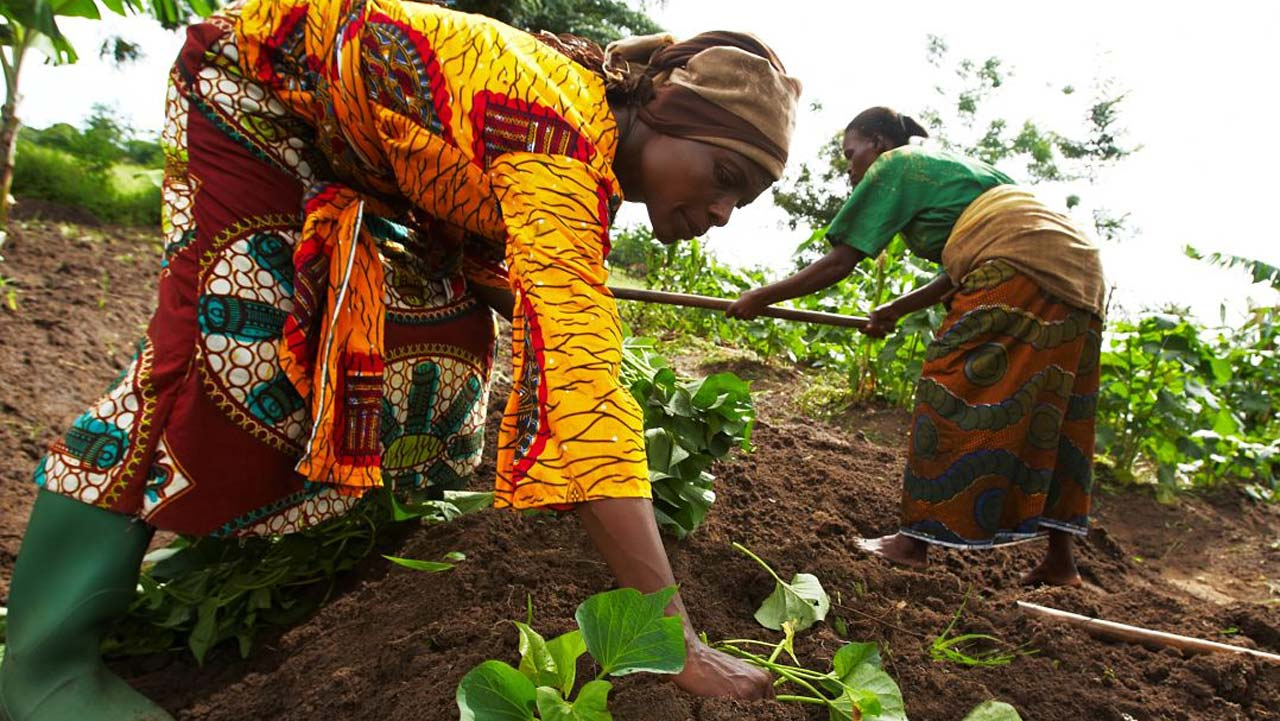 Don Encourages Backyard Farming The Guardian Nigeria News Nigeria And World News Features The Guardian Nigeria News Nigeria And World News Backyard farming in nigeria