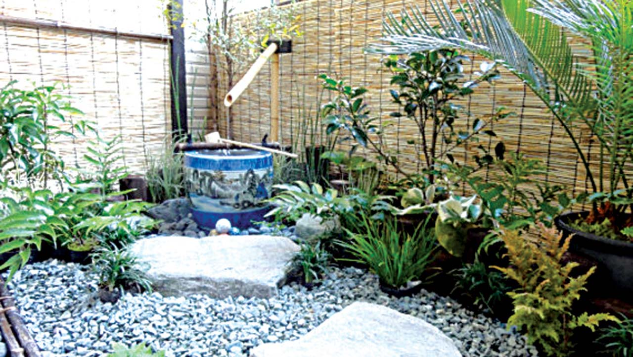 Gardening Without A Garden The Guardian Nigeria News
