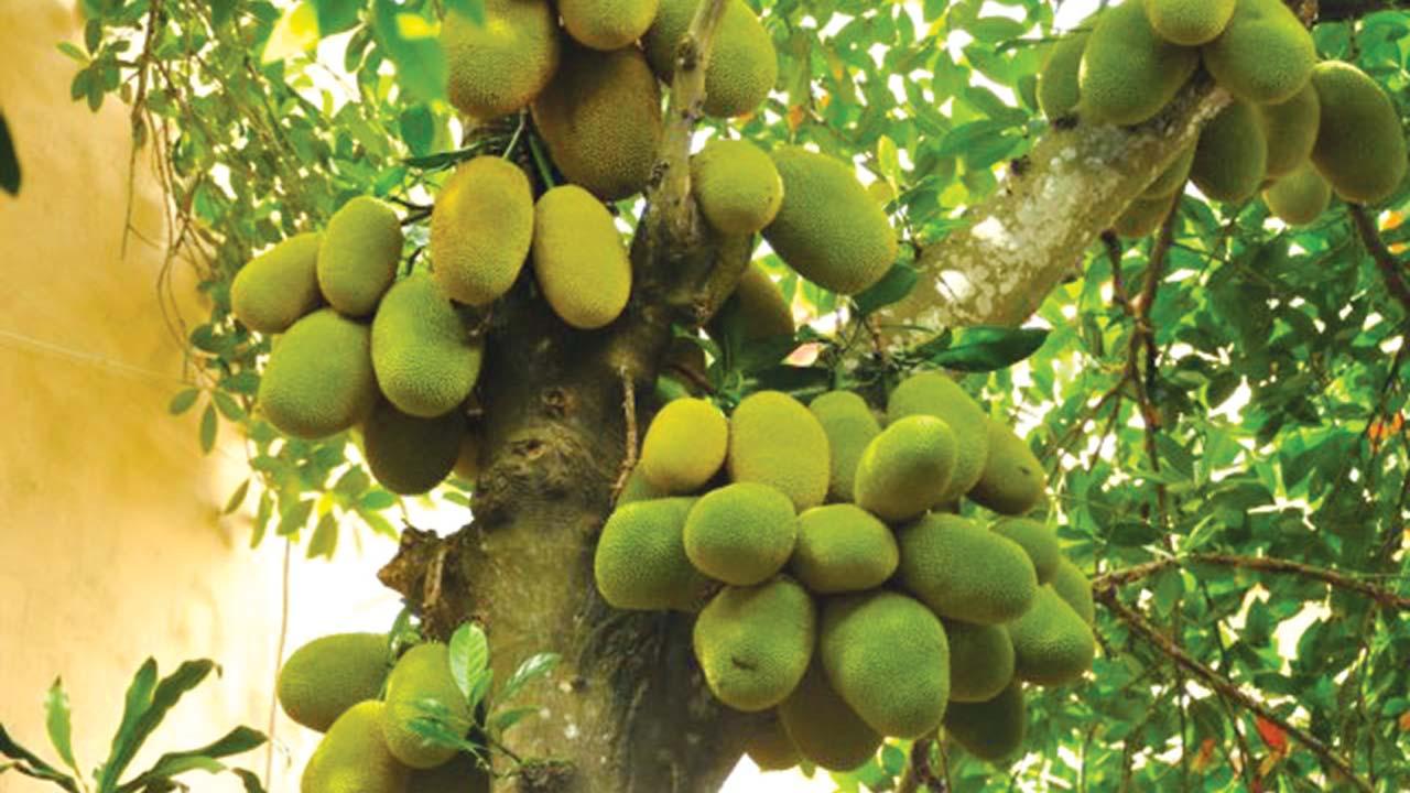 Foodscaping Saturday Magazine The Guardian Nigeria