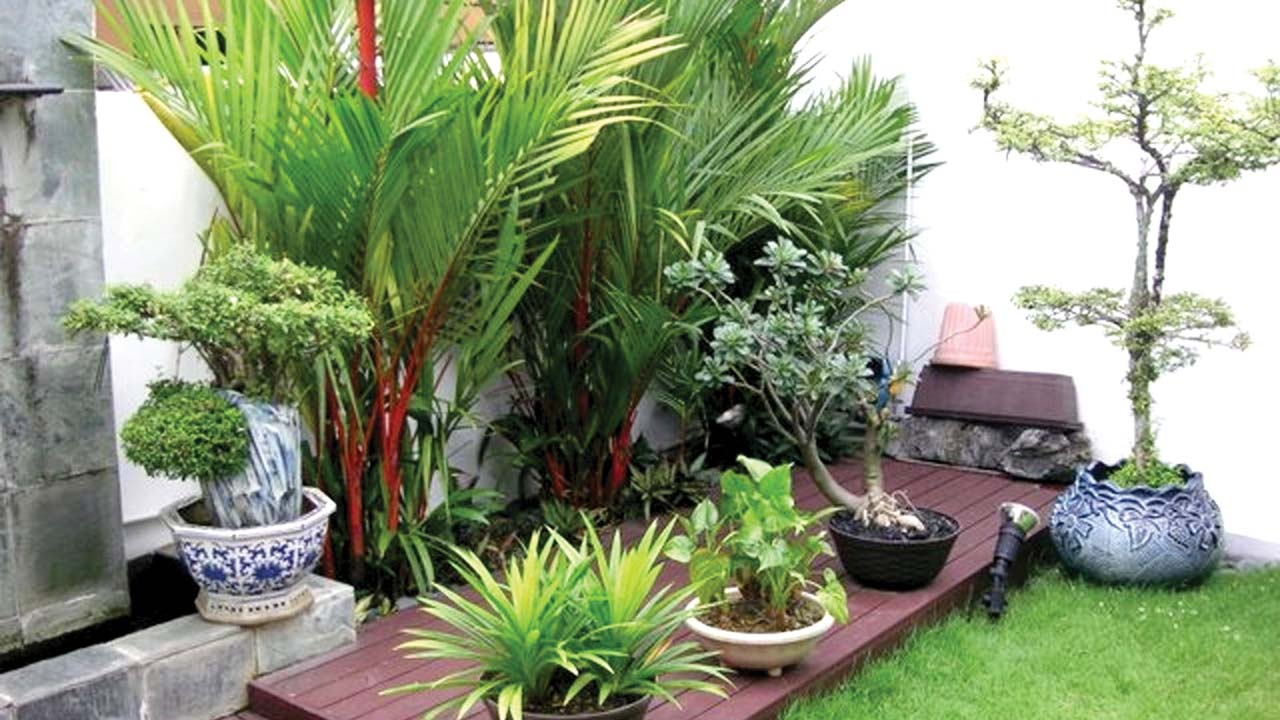 Tropical garden in any space or climate — Property — The ...