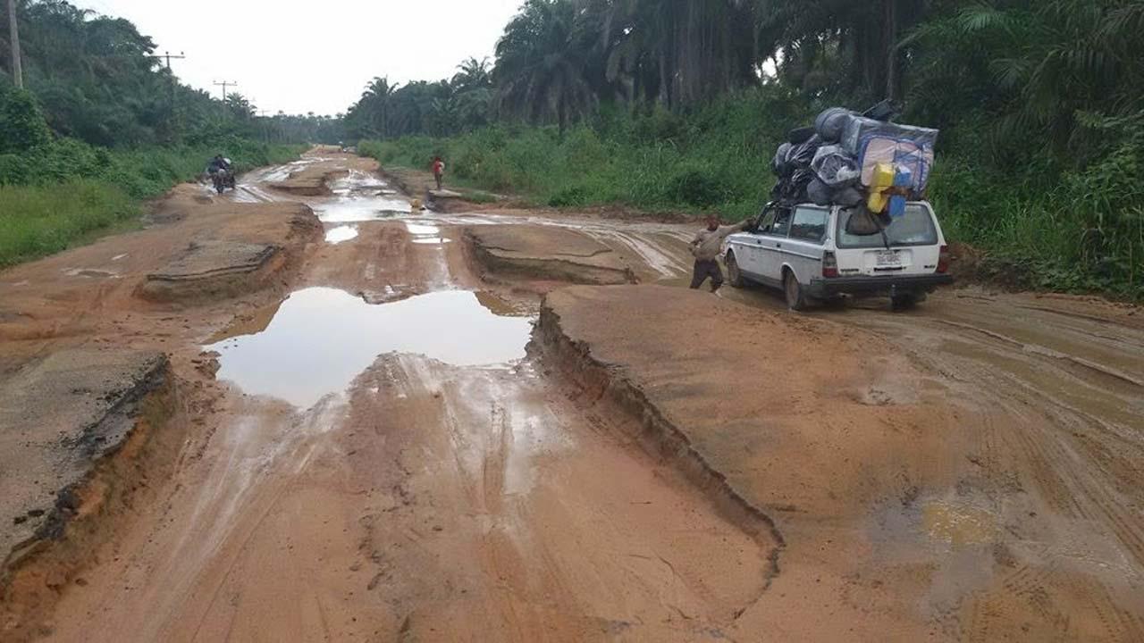 Argumentative essay deforestation