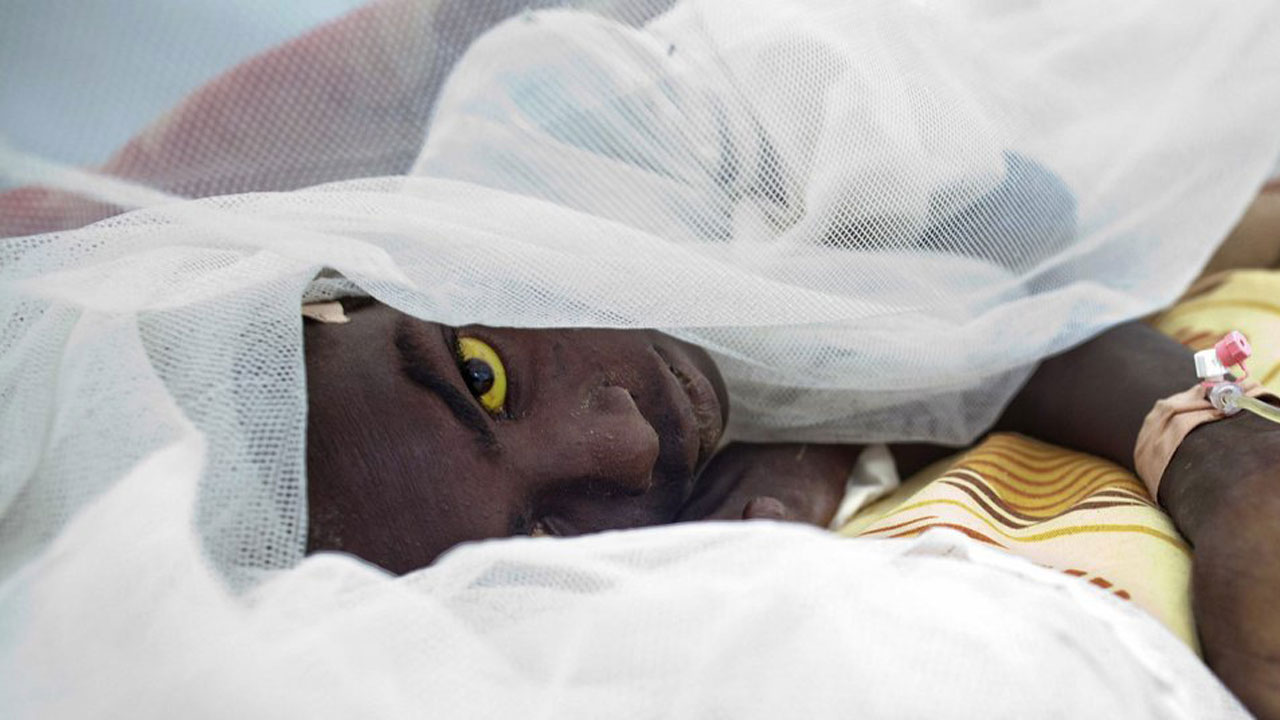 Yellow Fever kills 16 persons in Ebonyi State