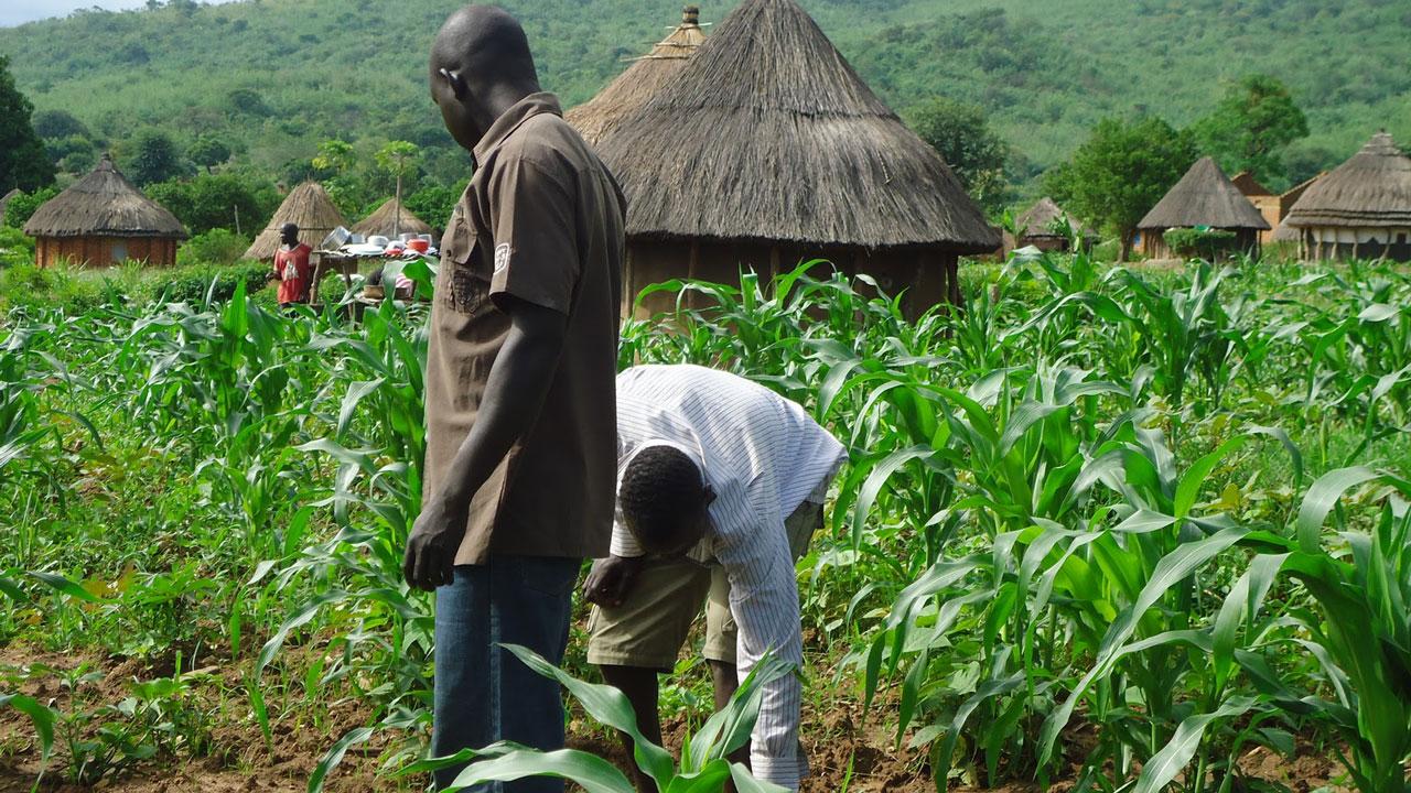 Farming activities resume in Jigawa — Nigeria — The Guardian Nigeria ...