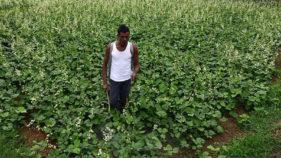 Pesticide poisoning kills 20 farmers