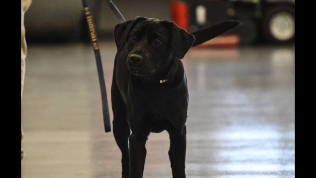 CIA fires Lulu, a bomb-sniffing dog