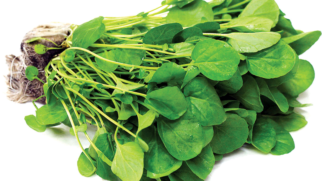 watercress the  u201cweed u201d with tremendous healing power weed clip art and booms pipes weed clipart outline