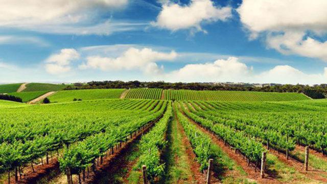 NACC seeks stronger agribusiness, power ties with U.S.