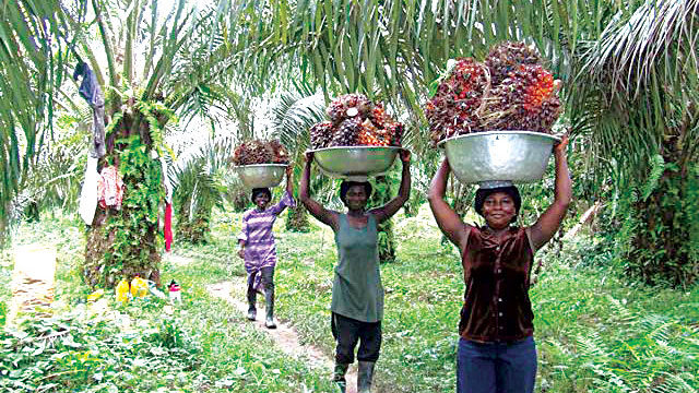 Image result for palm oil farmers in nigeria