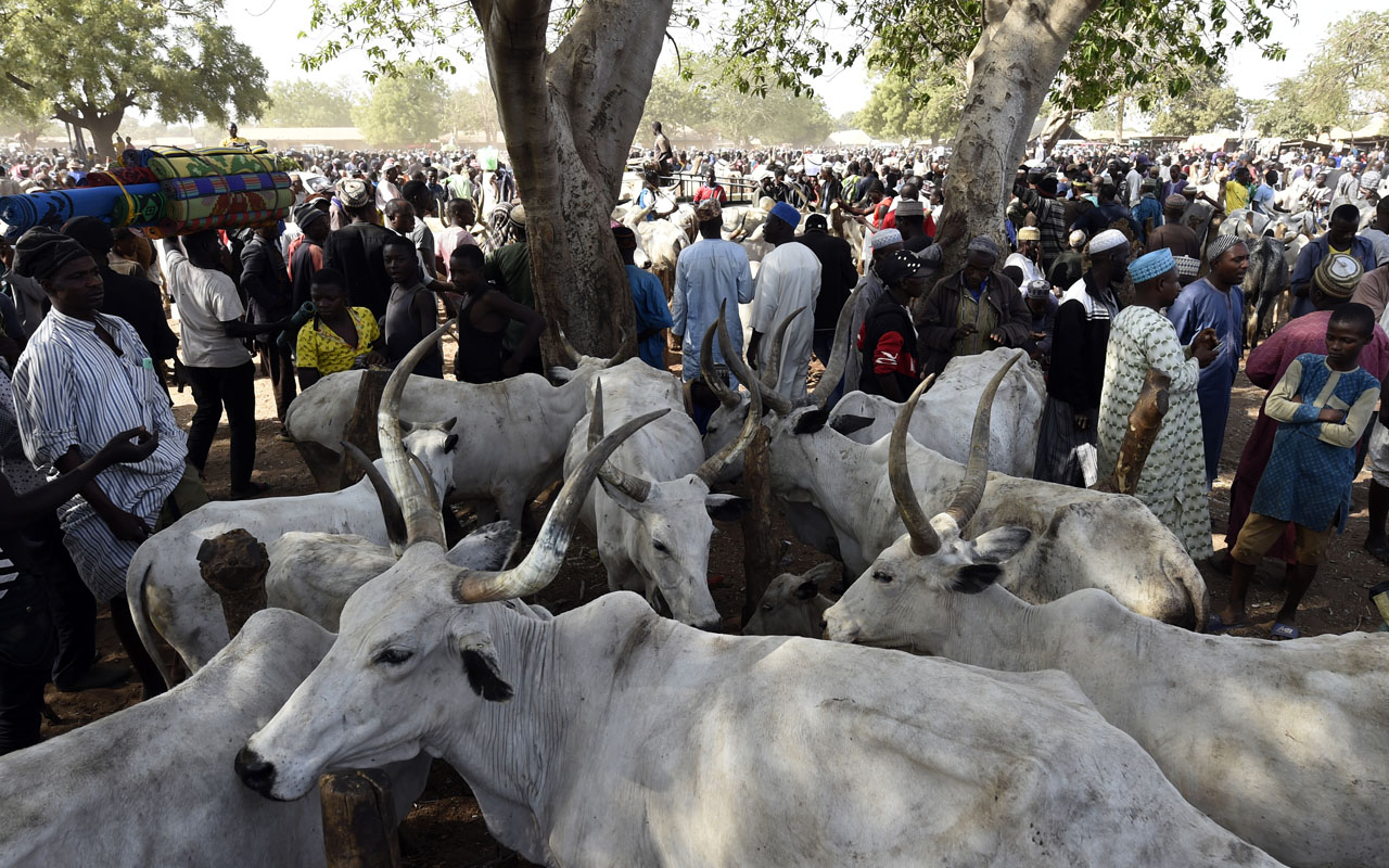 More states, groups reject Ruga settlements for herders