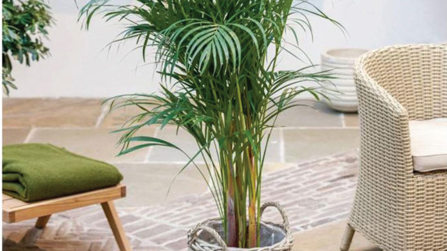 Best air-purifying houseplants