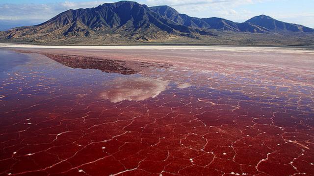 Danau Darah Natron