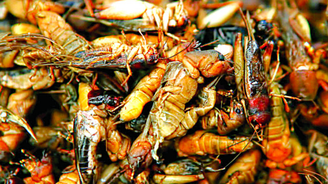 How eating insects reduces risk of chronic diseases