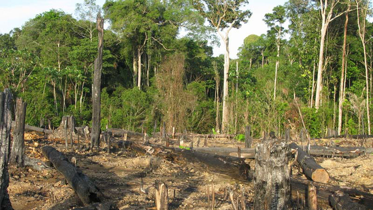What are Some of the Effects of Deforestation?