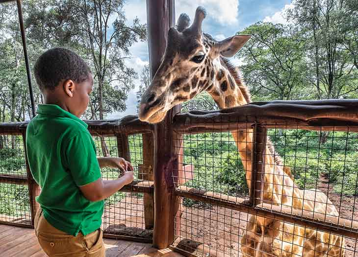 A child feeding a giraffe