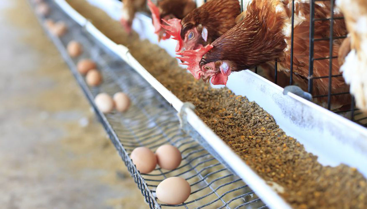 At vital feed's workshop, stakeholders demand farm settlements