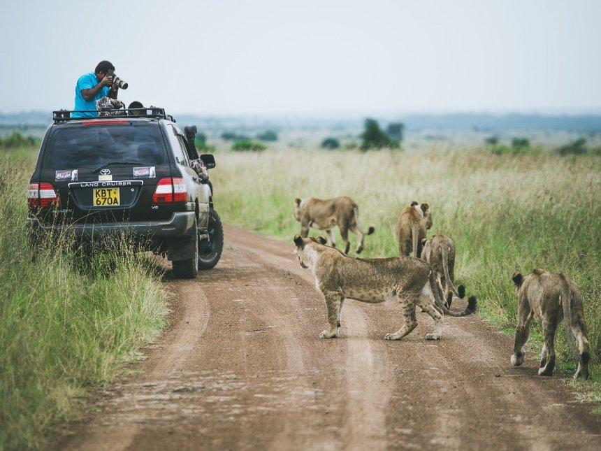 Visit The Nairobi National Park, Kenya   The Guardian Nigeria News ...