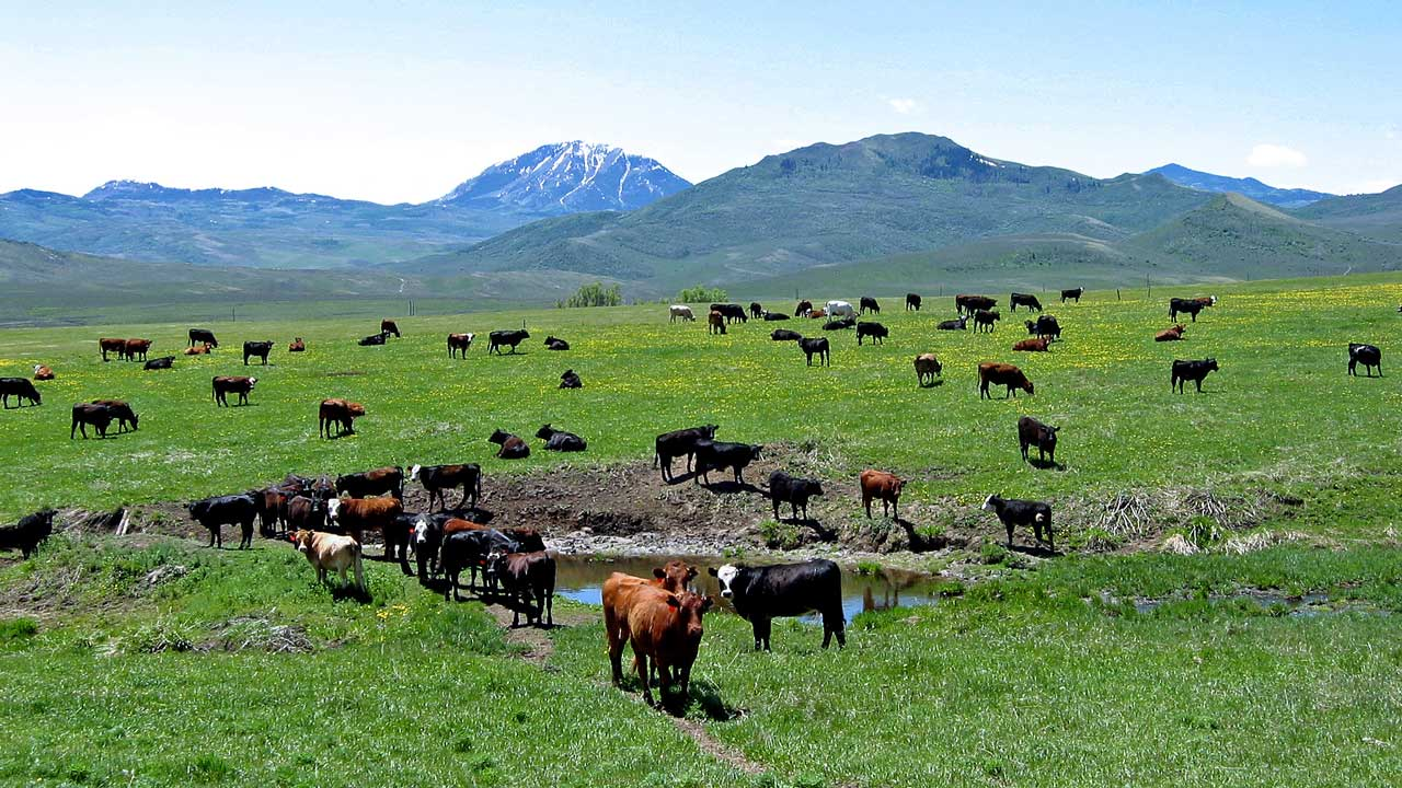2019 agric outlook as Federal Government prepares for cattle
