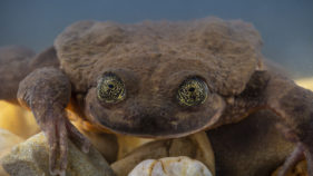 DOUNIAMAG BOLIVIA ANIMALS CONSERVATION FROG