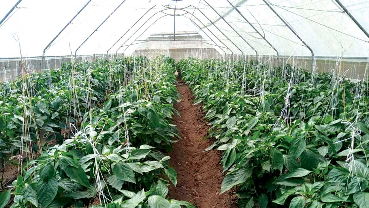 Growing Money In The Backyard The Guardian Nigeria News Nigeria And World News Features The Guardian Nigeria News Nigeria And World News Backyard farming in nigeria