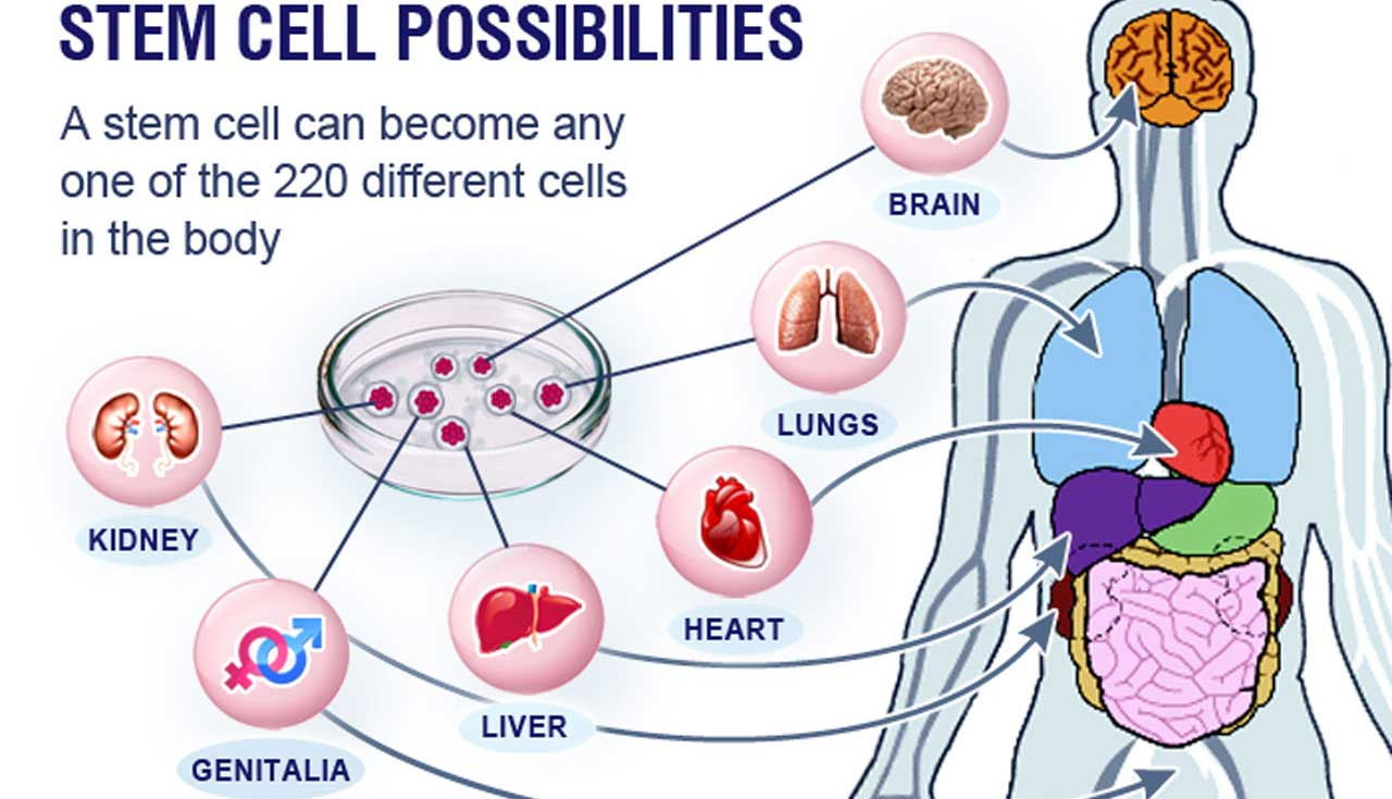 Nigeria nears clinical trials for stem cell therapies | The