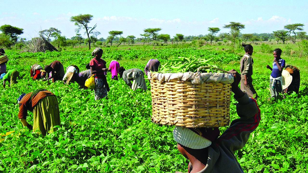 Women farmers call for more budgetary allocation to agric by FCT