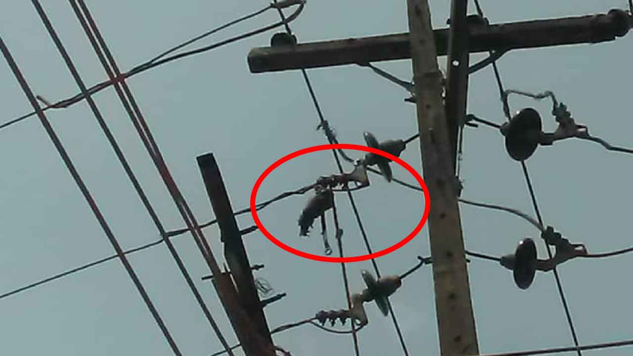 Electricity worker electrocuted, loses arm during disconnection